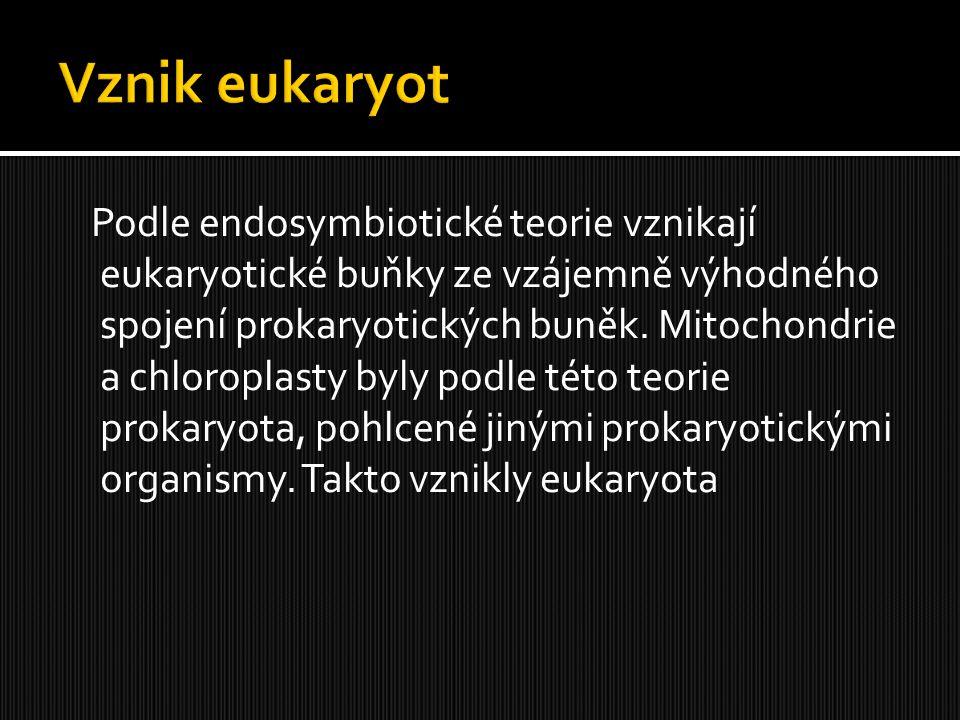 Vznik eukaryot