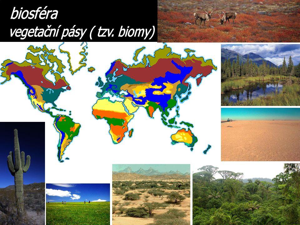 vegetační pásy ( tzv. biomy)