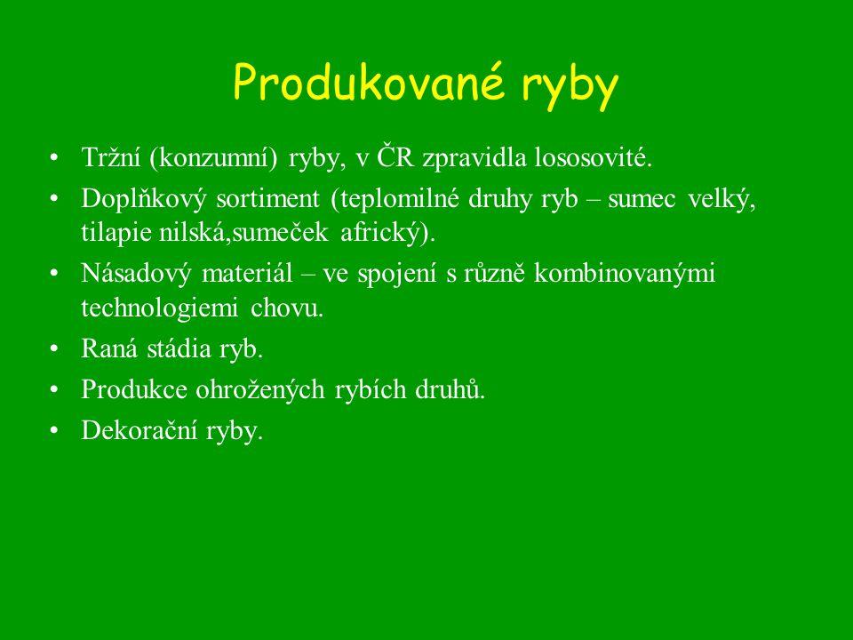 Produkované ryby Tržní (konzumní) ryby, v ČR zpravidla lososovité.