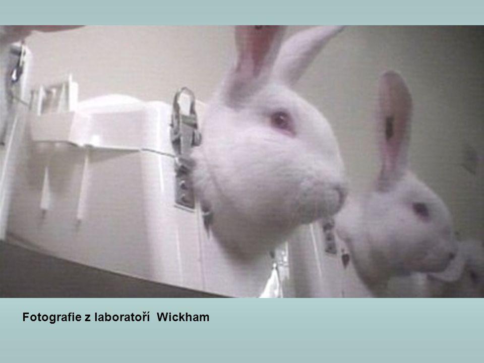 Fotografie z laboratoří Wickham