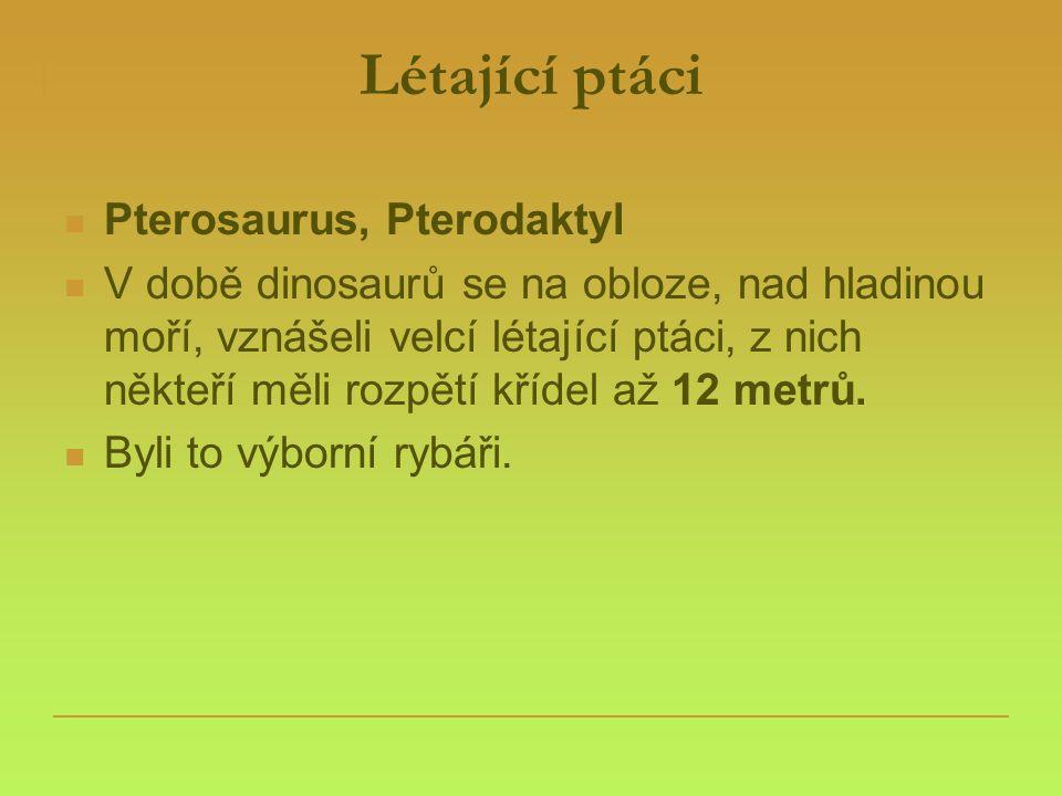 Létající ptáci Pterosaurus, Pterodaktyl