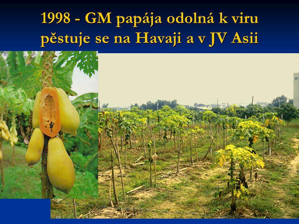 1998 - GM papája odolná k viru pěstuje se na Havaji a v JV Asii