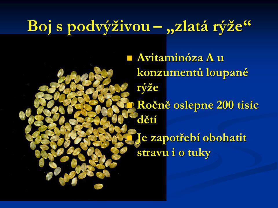 """Boj s podvýživou – """"zlatá rýže"""