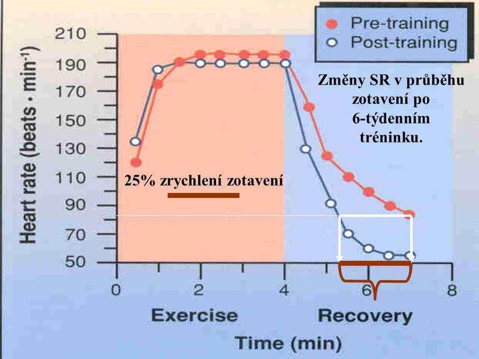 Změny SR v průběhu zotavení po 6-týdenním tréninku. 25% zrychlení zotavení