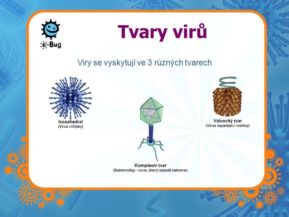 Tvary virů Viry se vyskytují ve 3 různých tvarech Válcovitý tvar
