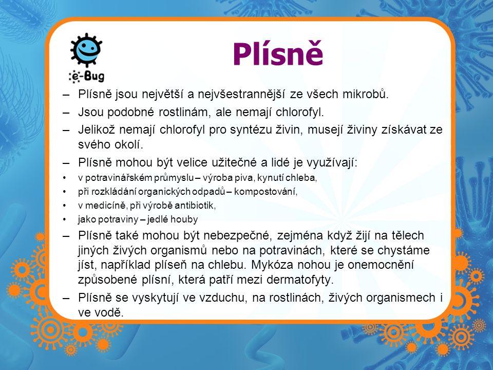 Plísně Plísně jsou největší a nejvšestrannější ze všech mikrobů.