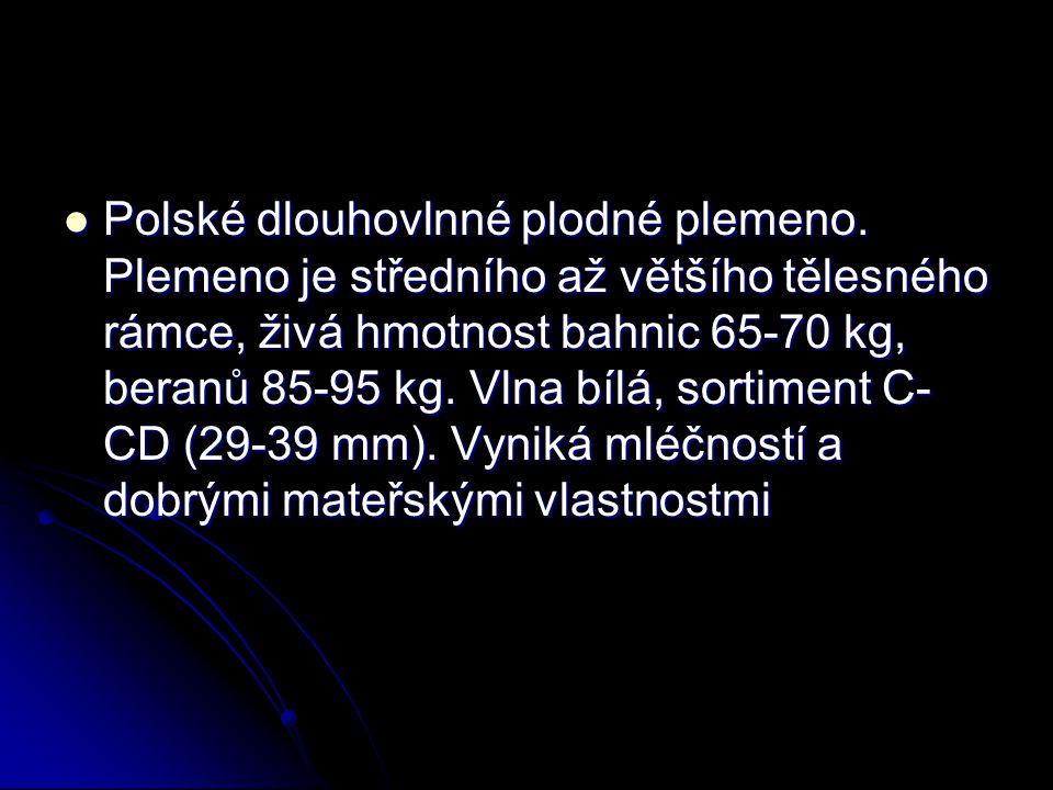 Polské dlouhovlnné plodné plemeno