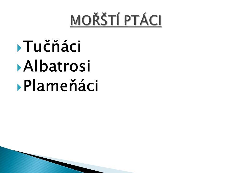 MOŘŠTÍ PTÁCI Tučňáci Albatrosi Plameňáci