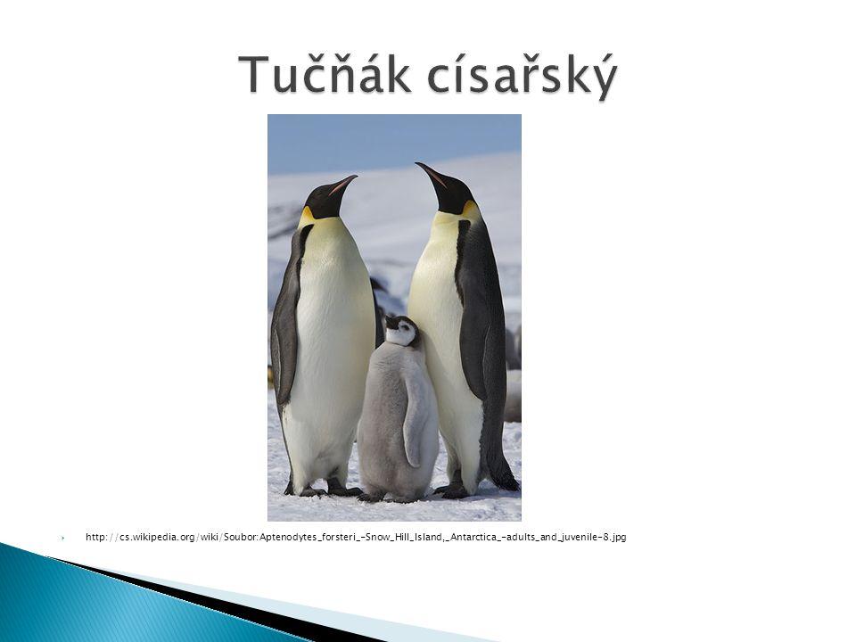 Tučňák císařský http://cs.wikipedia.org/wiki/Soubor:Aptenodytes_forsteri_-Snow_Hill_Island,_Antarctica_-adults_and_juvenile-8.jpg.