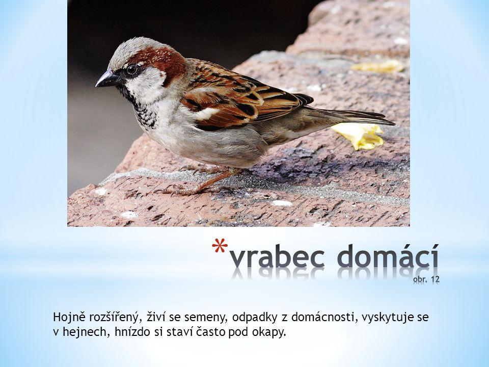 vrabec domácí obr. 12 Hojně rozšířený, živí se semeny, odpadky z domácnosti, vyskytuje se.