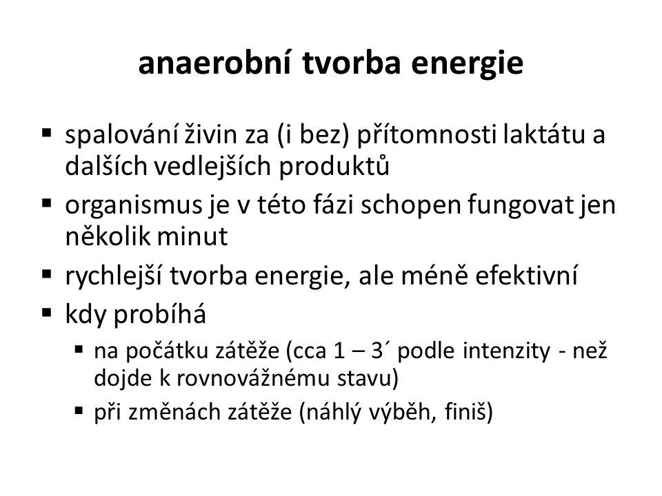 anaerobní tvorba energie
