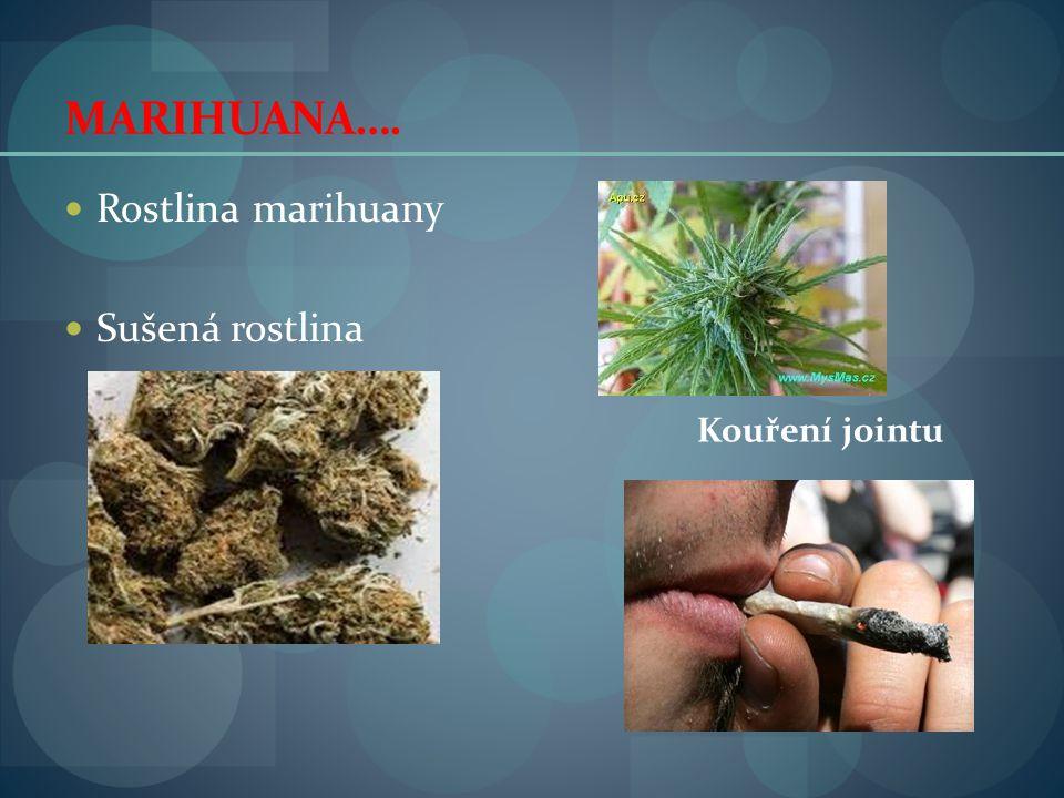 MARIHUANA…. Rostlina marihuany Sušená rostlina Kouření jointu