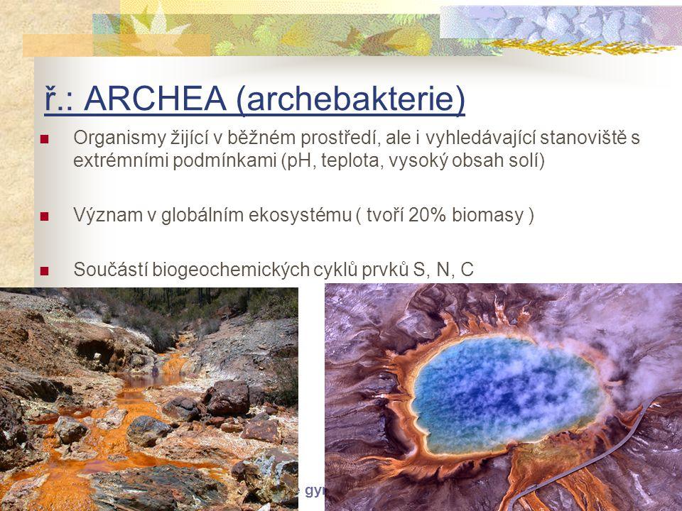ř.: ARCHEA (archebakterie)