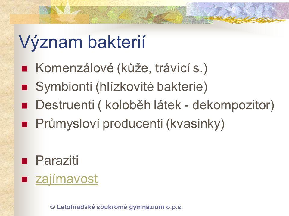 Význam bakterií Komenzálové (kůže, trávicí s.)