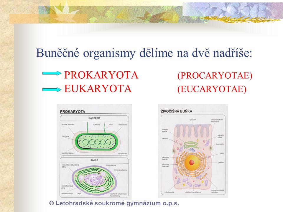 Buněčné organismy dělíme na dvě nadříše:
