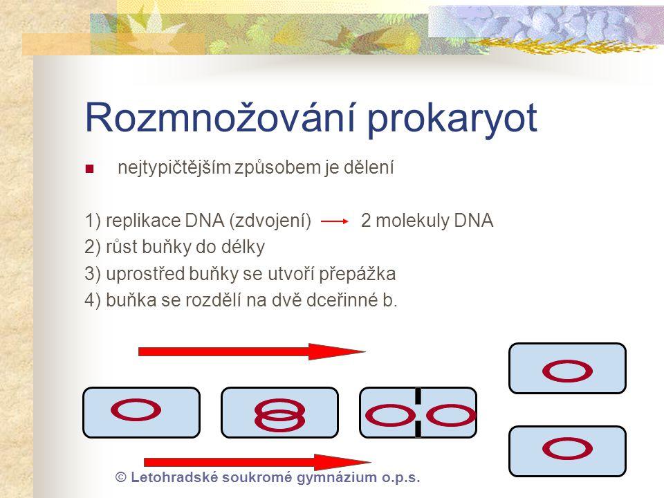 Rozmnožování prokaryot