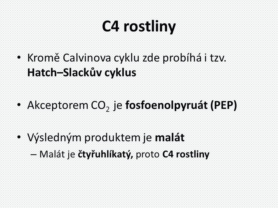 C4 rostliny Kromě Calvinova cyklu zde probíhá i tzv. Hatch–Slackův cyklus. Akceptorem CO2 je fosfoenolpyruát (PEP)
