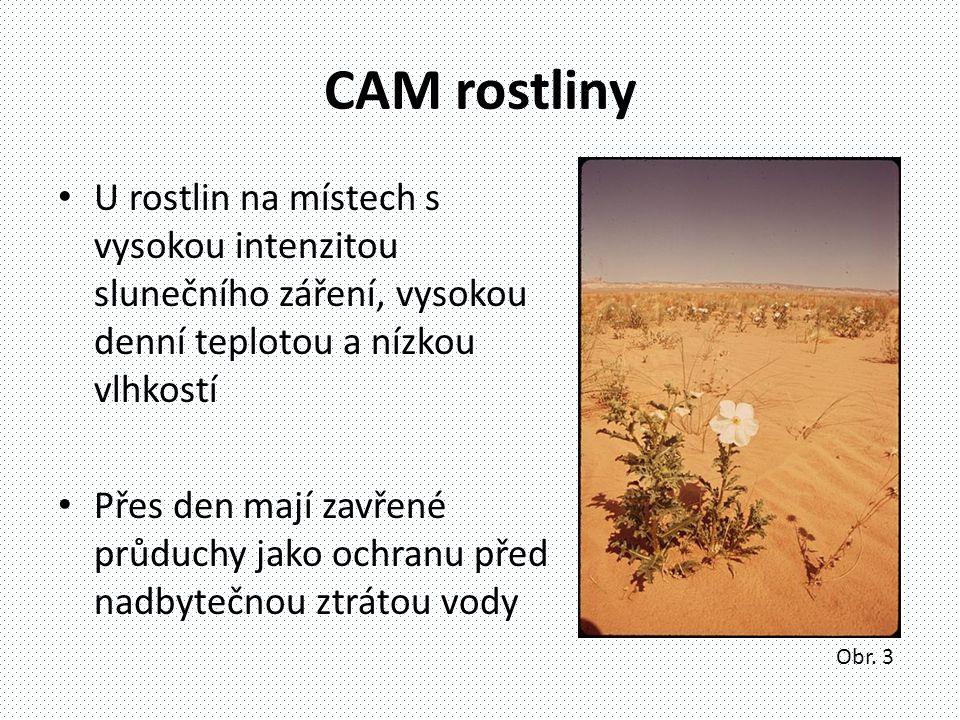 CAM rostliny U rostlin na místech s vysokou intenzitou slunečního záření, vysokou denní teplotou a nízkou vlhkostí.