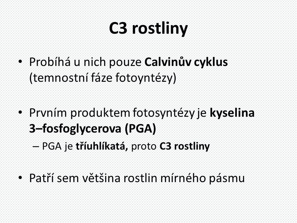 C3 rostliny Probíhá u nich pouze Calvinův cyklus (temnostní fáze fotoyntézy) Prvním produktem fotosyntézy je kyselina 3–fosfoglycerova (PGA)