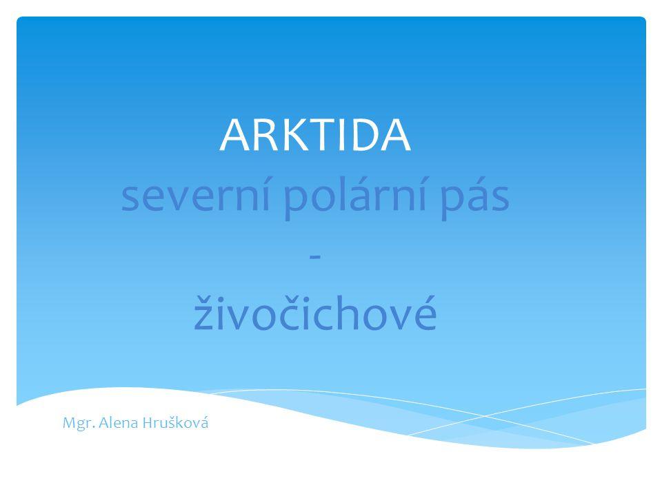 ARKTIDA severní polární pás - živočichové
