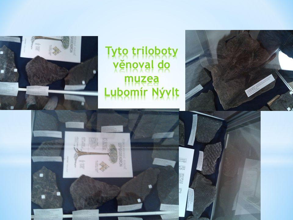 Tyto triloboty věnoval do muzea Lubomír Nývlt