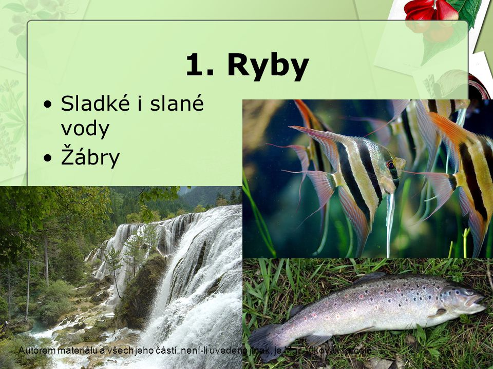 1. Ryby Sladké i slané vody Žábry