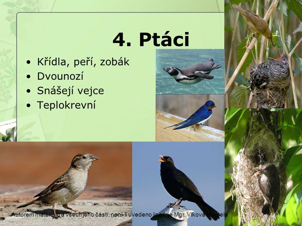 4. Ptáci Křídla, peří, zobák Dvounozí Snášejí vejce Teplokrevní