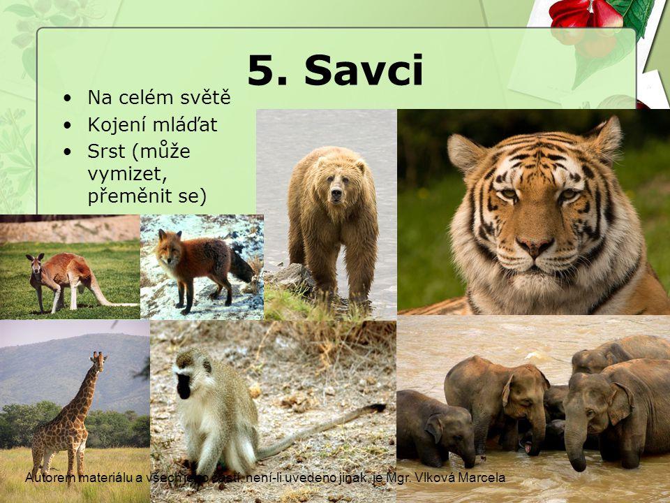 5. Savci Na celém světě Kojení mláďat Srst (může vymizet, přeměnit se)