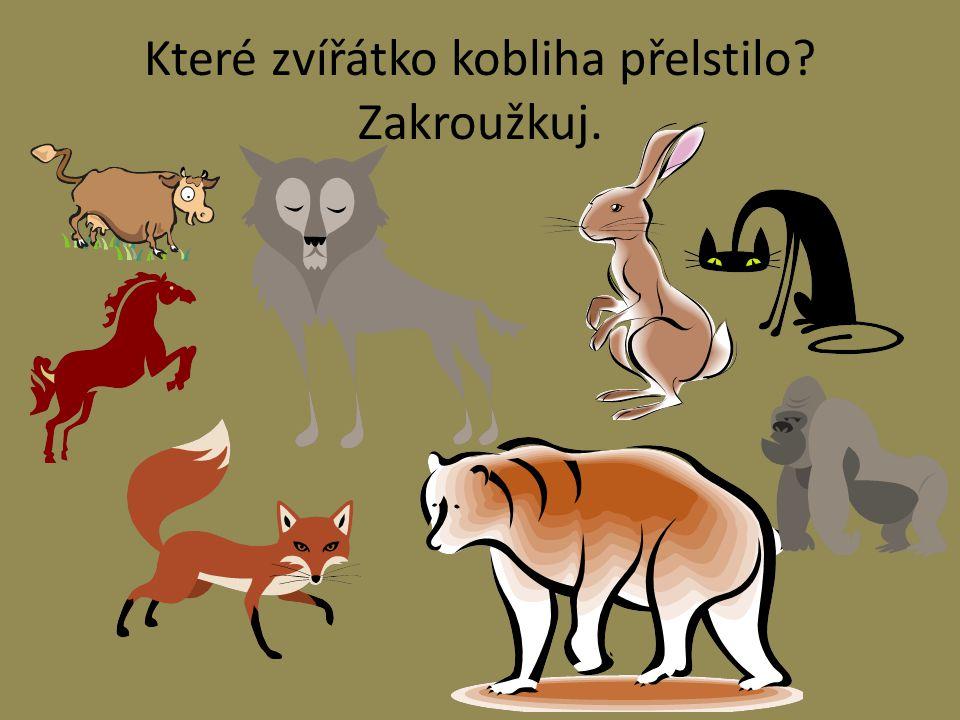 Které zvířátko kobliha přelstilo Zakroužkuj.
