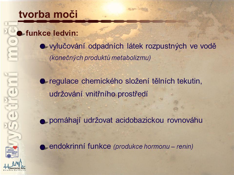 tvorba moči funkce ledvin: