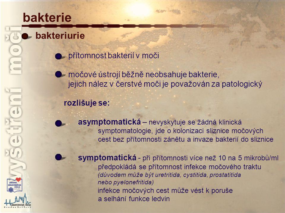 bakterie bakteriurie přítomnost bakterií v moči