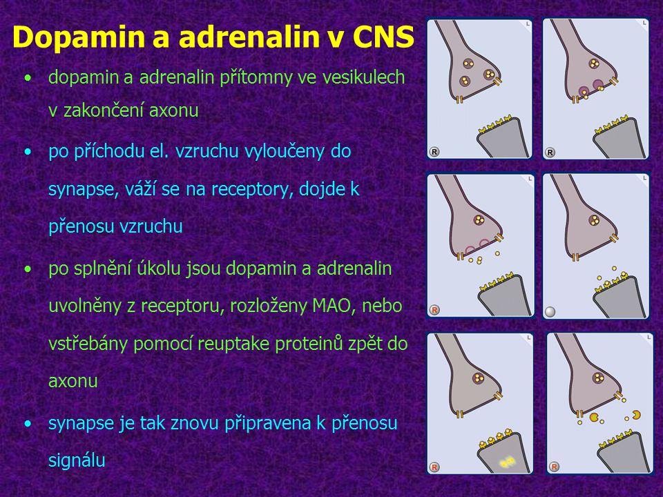 Dopamin a adrenalin v CNS
