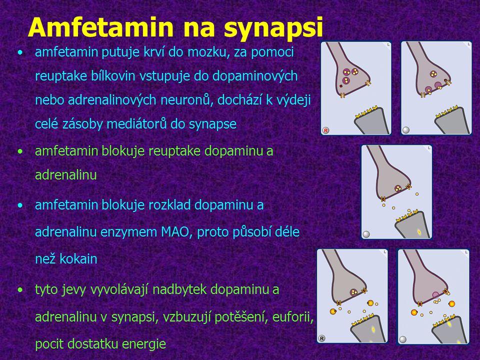 Amfetamin na synapsi
