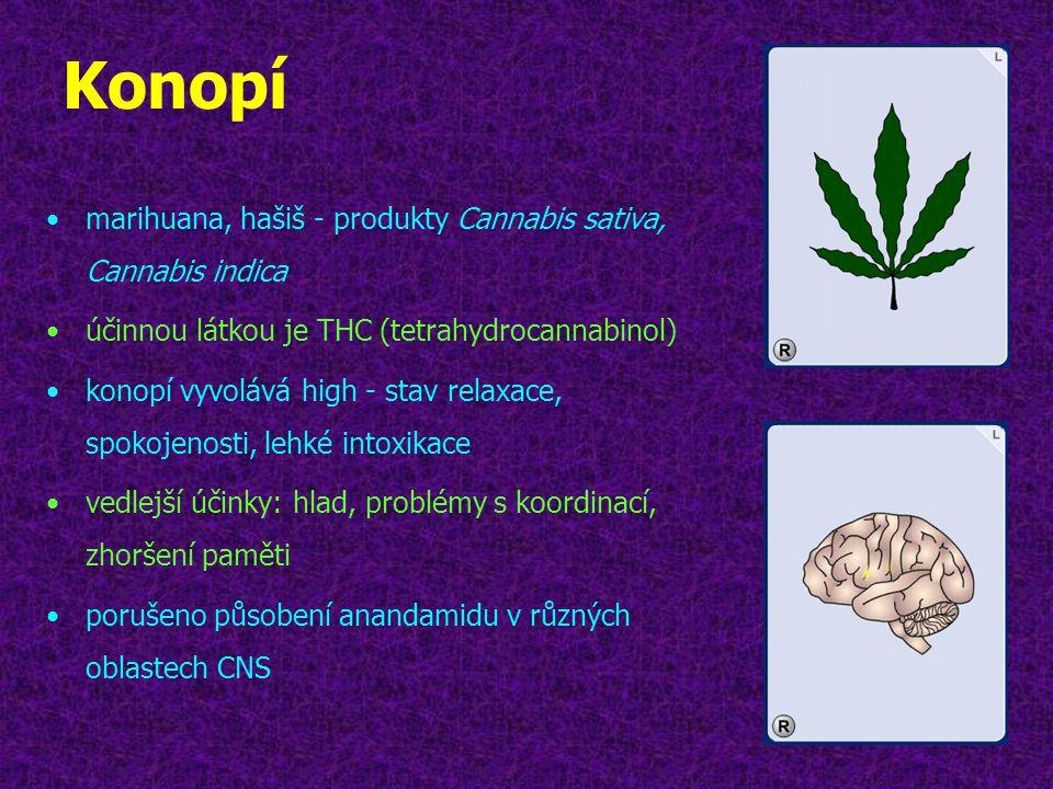 Konopí marihuana, hašiš - produkty Cannabis sativa, Cannabis indica