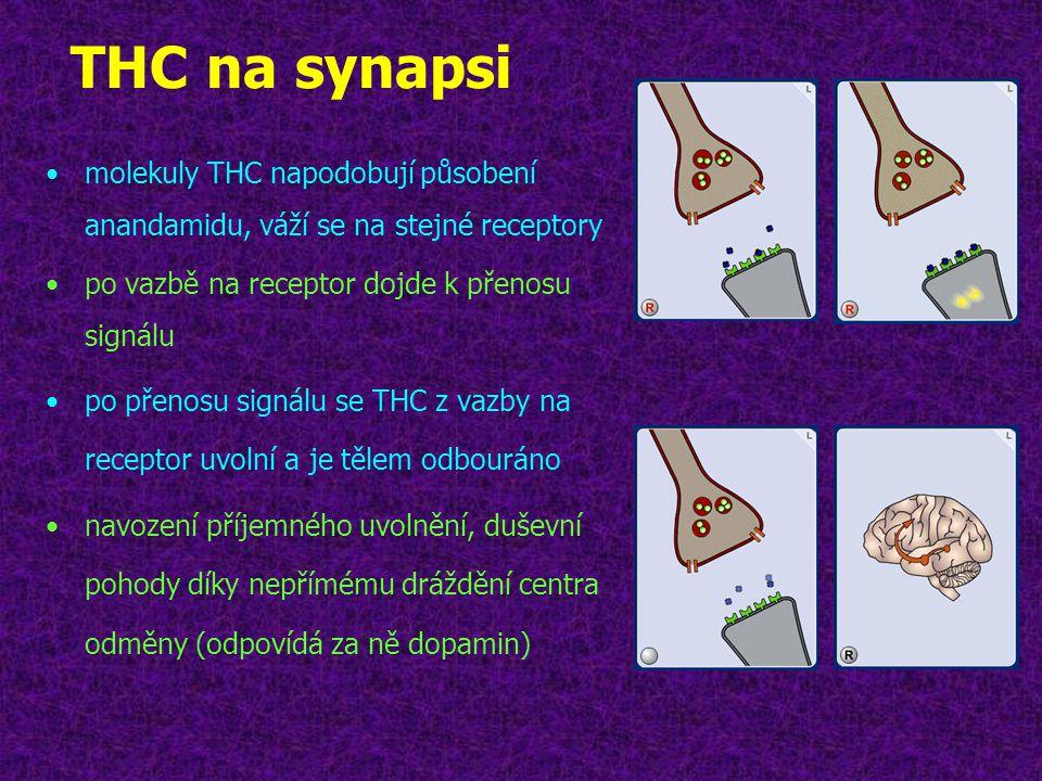 THC na synapsi molekuly THC napodobují působení anandamidu, váží se na stejné receptory. po vazbě na receptor dojde k přenosu signálu.