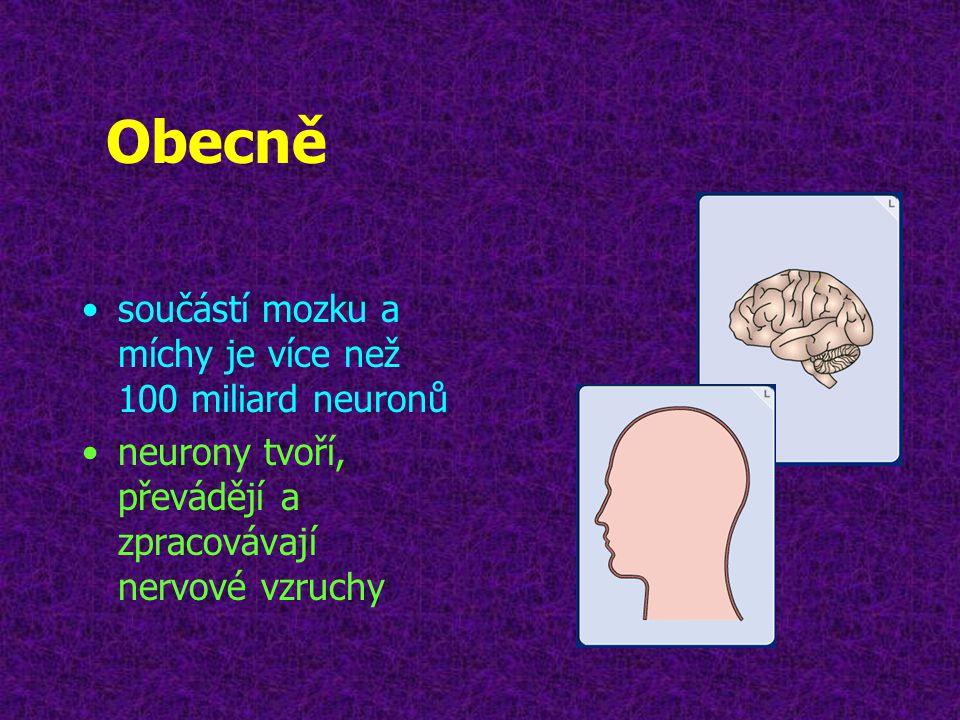 Obecně součástí mozku a míchy je více než 100 miliard neuronů
