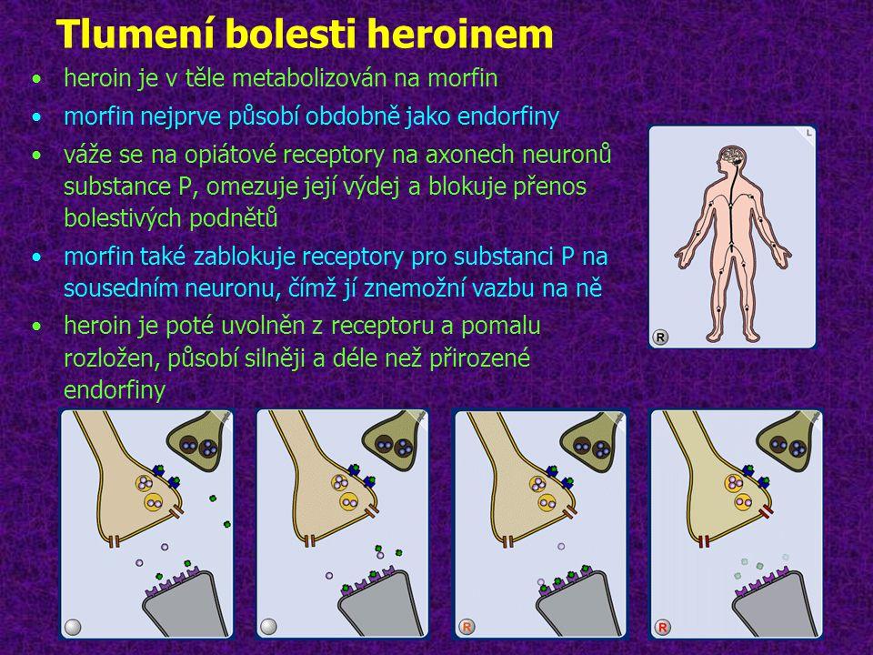 Tlumení bolesti heroinem