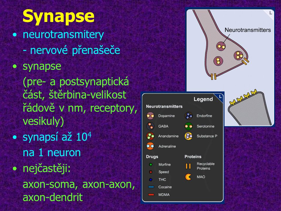 Synapse neurotransmitery - nervové přenašeče synapse
