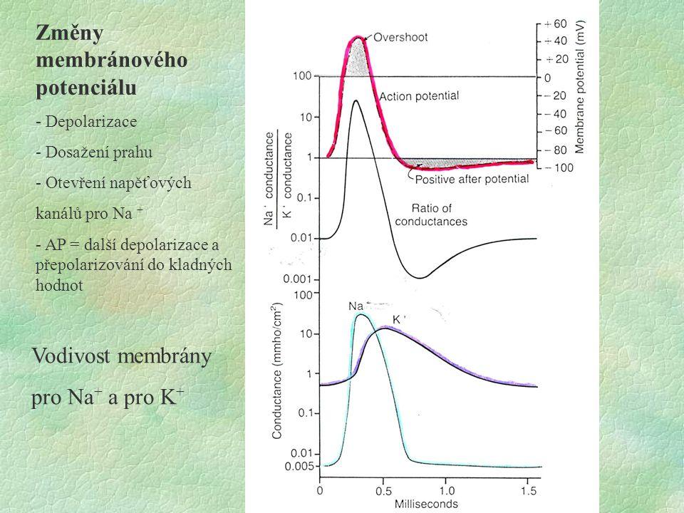 Změny membránového potenciálu