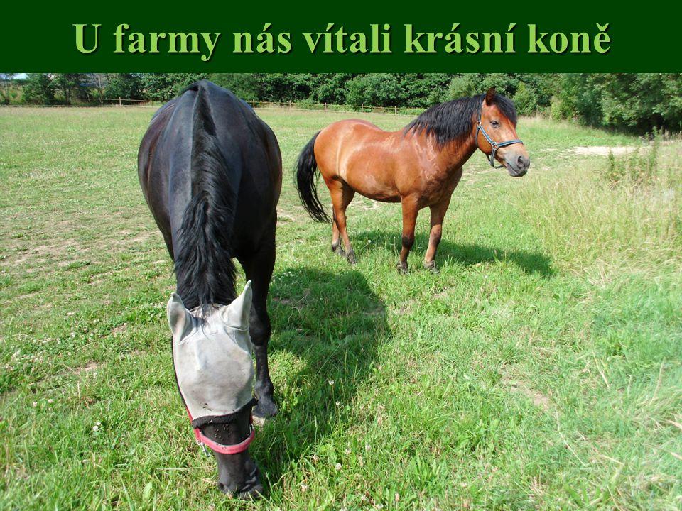 U farmy nás vítali krásní koně