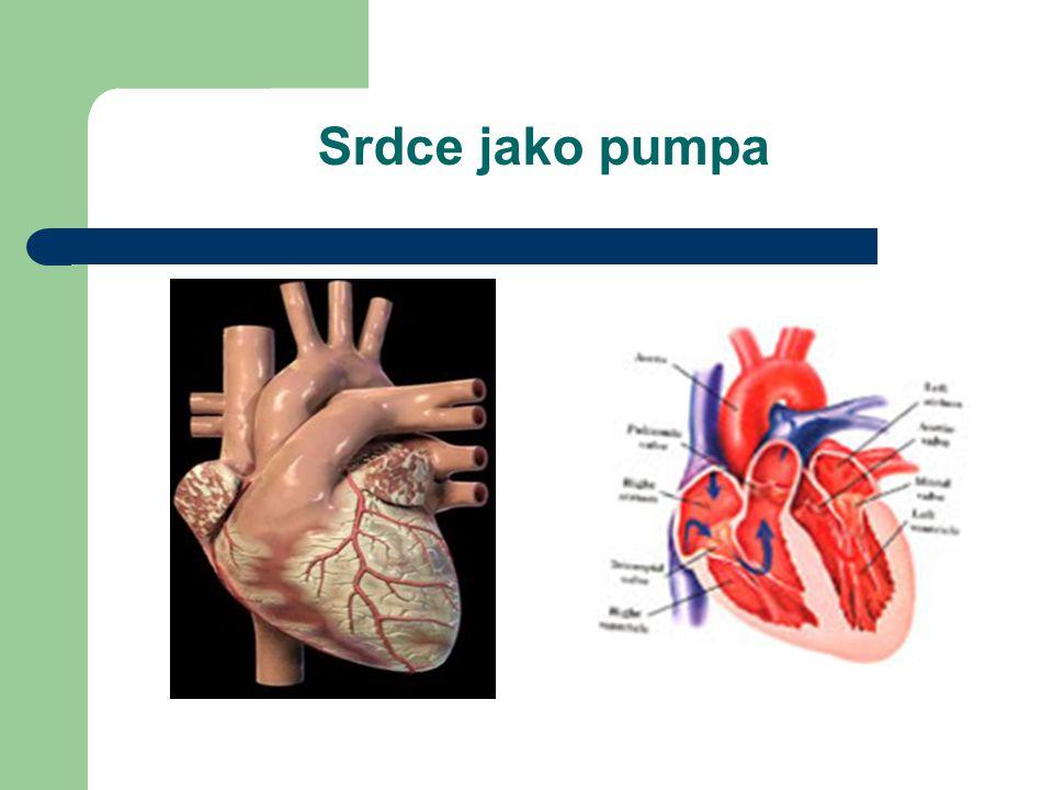 Srdce jako pumpa
