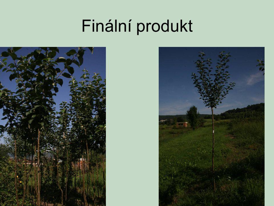 Finální produkt
