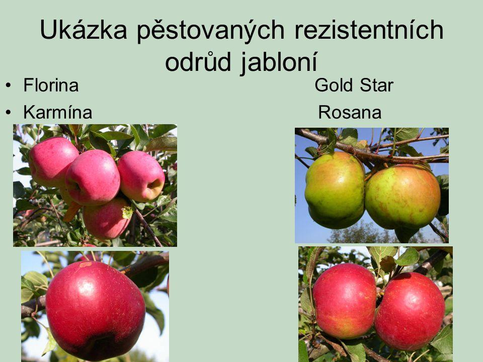 Ukázka pěstovaných rezistentních odrůd jabloní