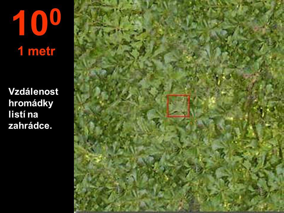100 1 metr Vzdálenost hromádky listí na zahrádce.