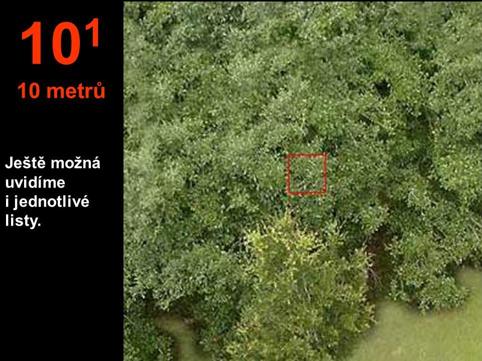 101 10 metrů Ještě možná uvidíme i jednotlivé listy.