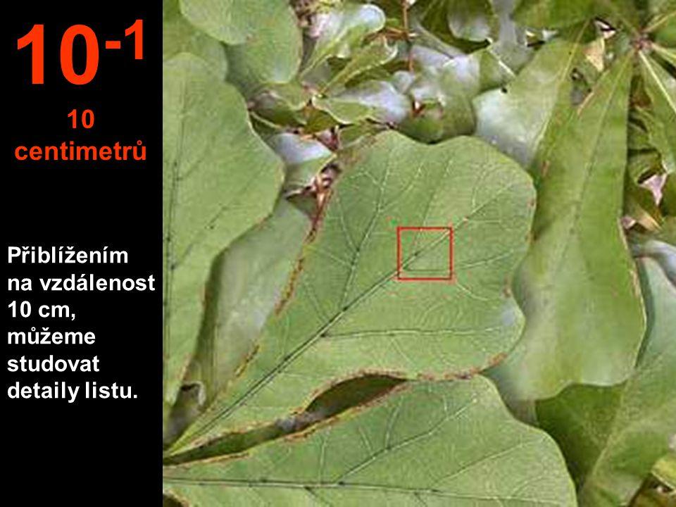 10-1 10 centimetrů Přiblížením na vzdálenost 10 cm, můžeme studovat detaily listu.