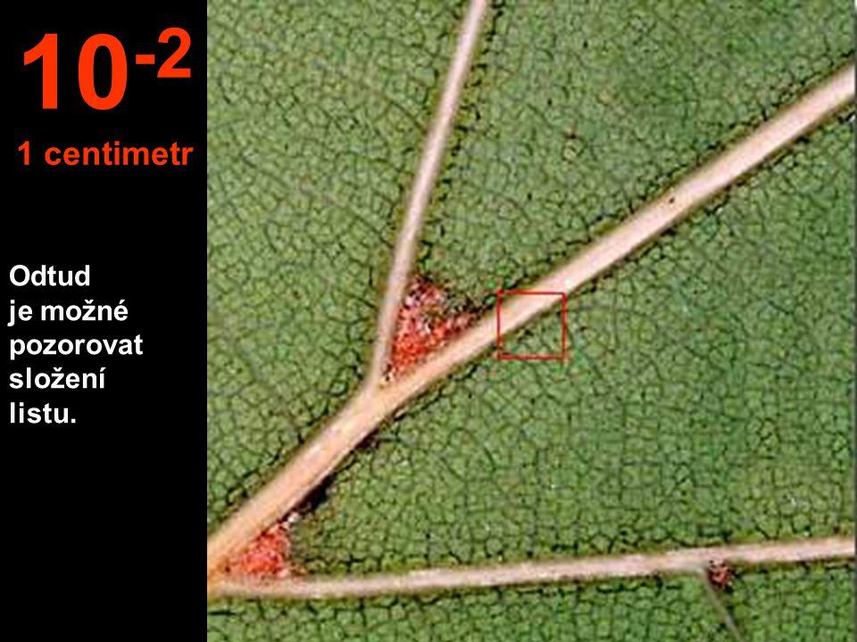 10-2 1 centimetr Odtud je možné pozorovat složení listu.