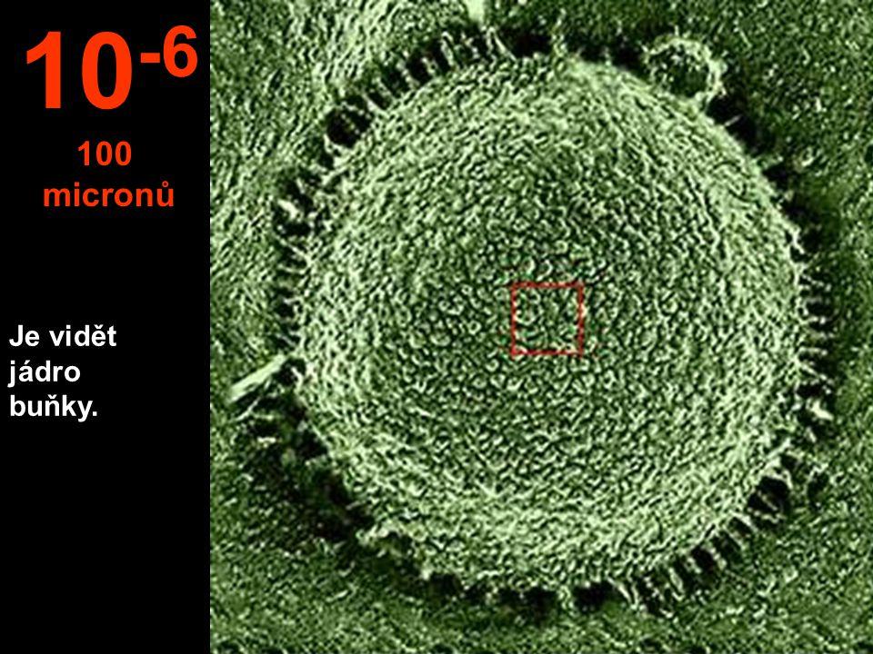 10-6 100 micronů Je vidět jádro buňky.