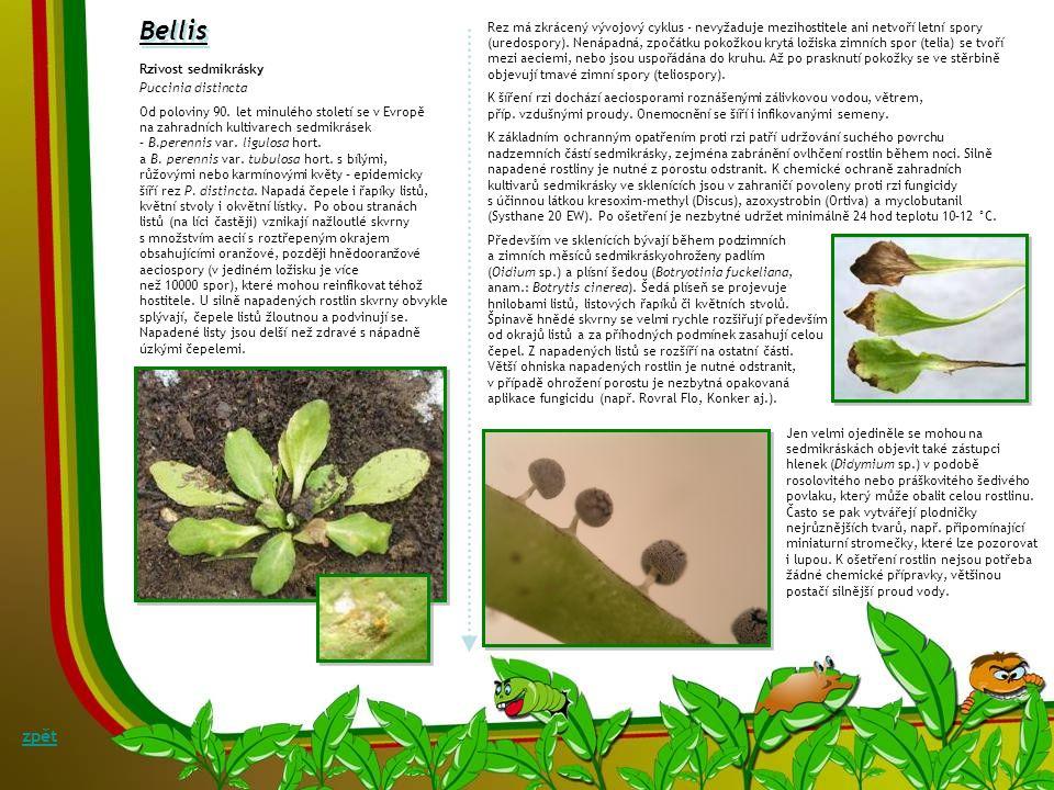 Bellis Rez má zkrácený vývojový cyklus - nevyžaduje mezihostitele ani netvoří letní spory.