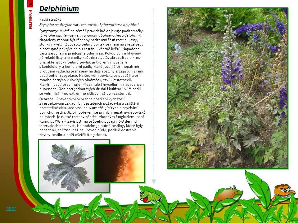 Delphinium zpět Padlí stračky